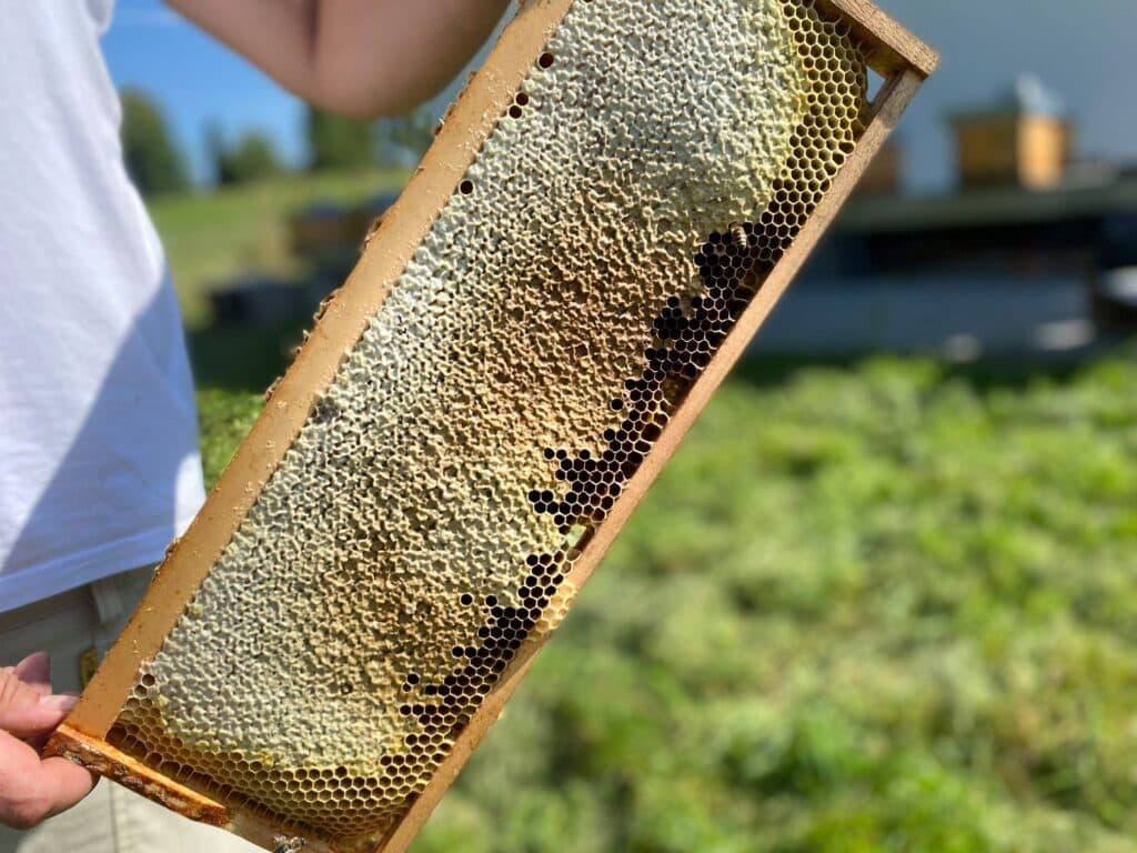 Stáčení medu