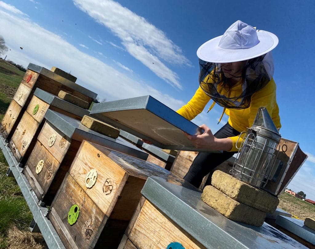 Jarní kontrola včelstev