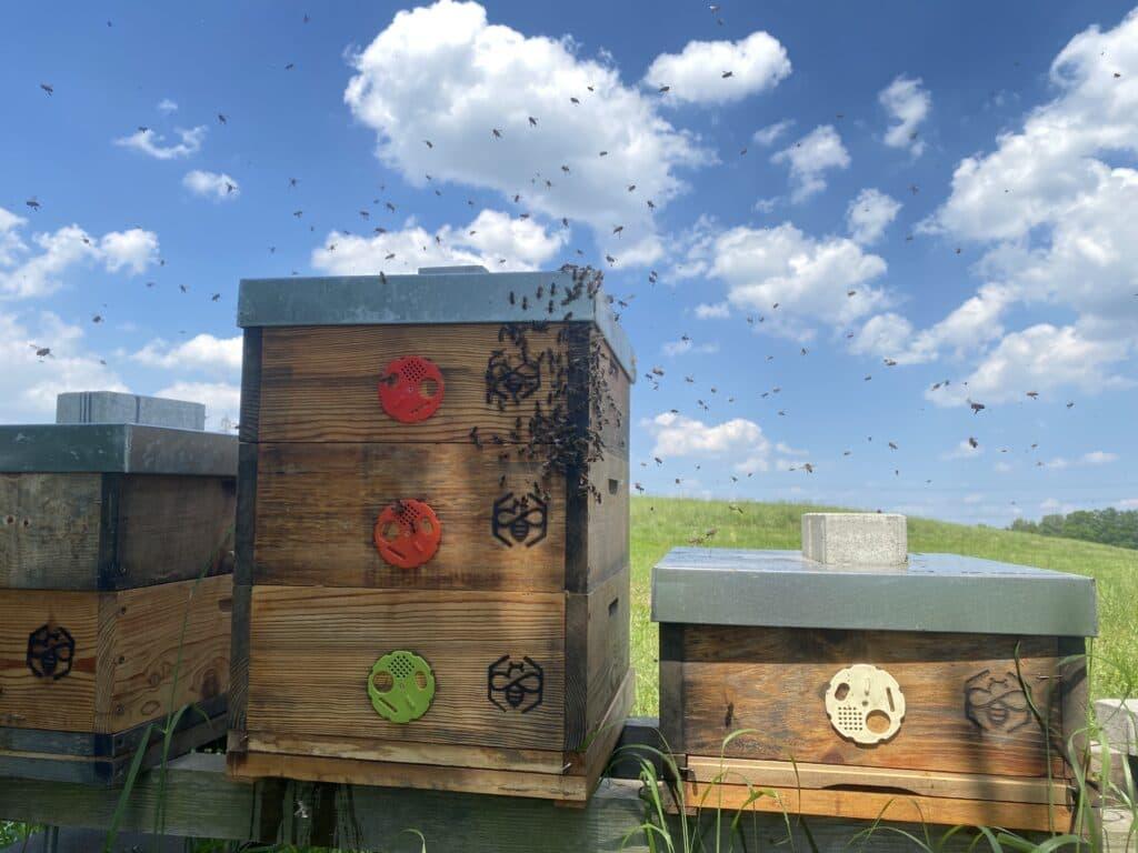 Rojová nálada ve včelstvu